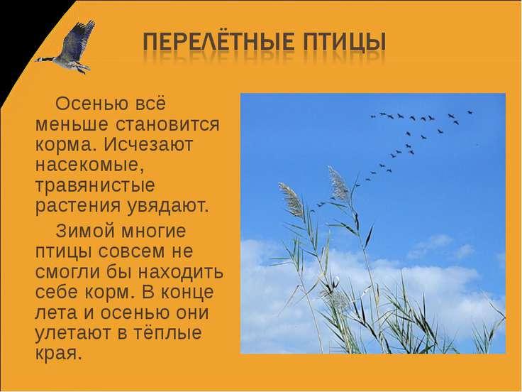 Осенью всё меньше становится корма. Исчезают насекомые, травянистые растения ...