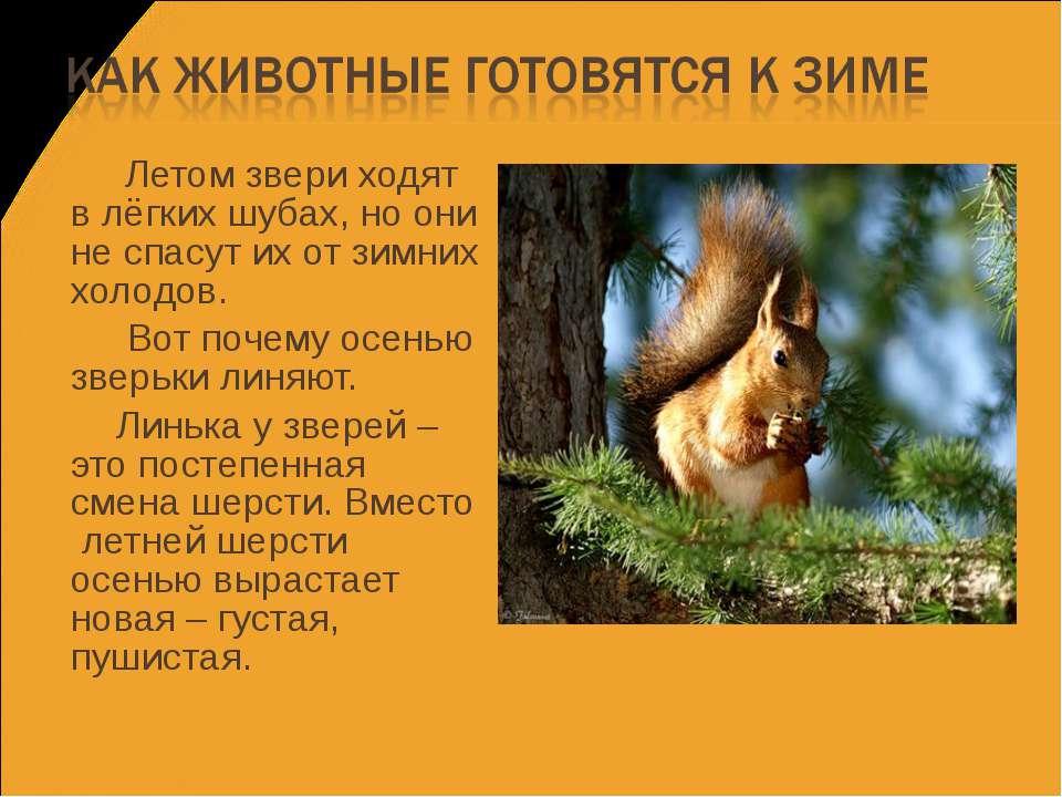 Летом звери ходят в лёгких шубах, но они не спасут их от зимних холодов. Вот ...