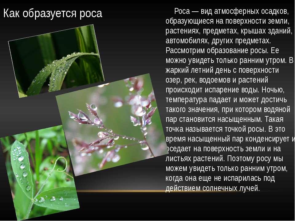 Как образуется роса Роса — вид атмосферных осадков, образующиеся на поверхнос...
