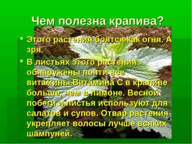 Чем полезна крапива? Этого растения боятся как огня. А зря. В листьях этого р...