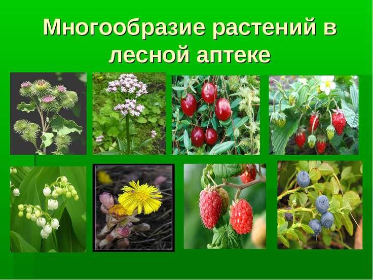 Многообразие растений в лесной аптеке