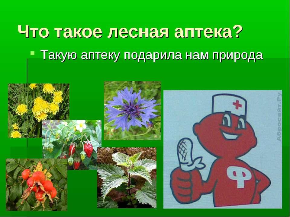 Что такое лесная аптека? Такую аптеку подарила нам природа