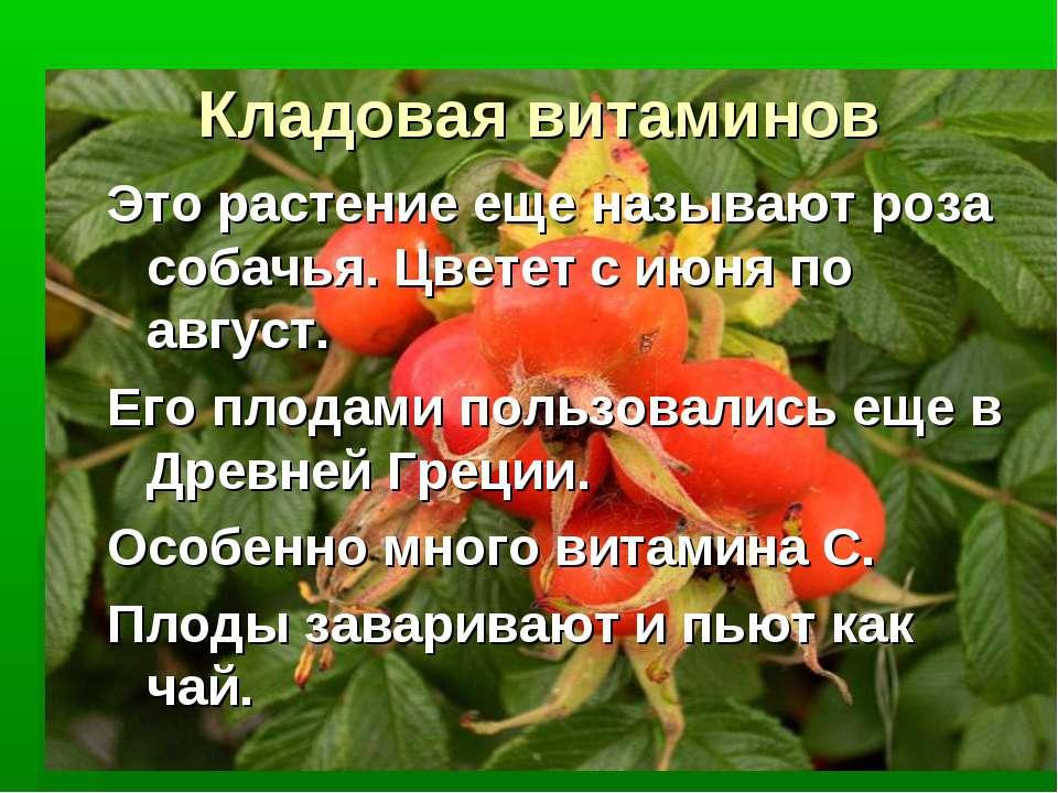 Кладовая витаминов Это растение еще называют роза собачья. Цветет с июня по а...