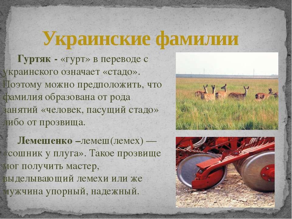 Гуртяк - «гурт» в переводе с украинского означает «стадо». Поэтому можно пред...