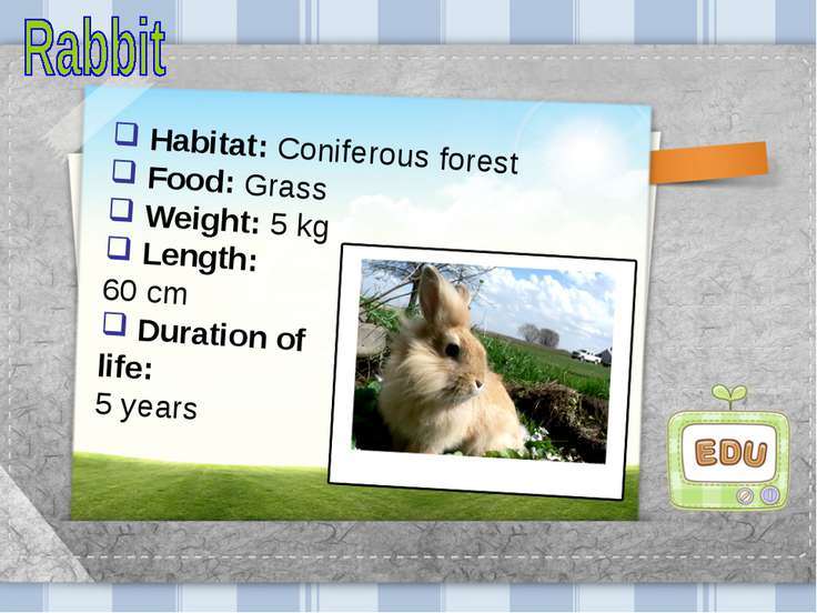 Habitat: Coniferous forest Food: Grass Weight: 5 kg Length: 60 cm Duration of...
