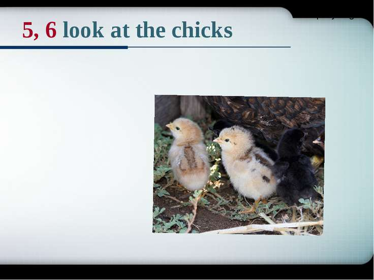 5, 6 look at the chicks