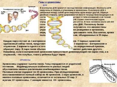 В молекулах ДНК хранится наследственная информация. Молекулы ДНК закручены в ...
