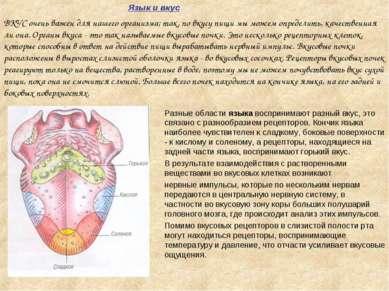 Язык и вкус Разные области языка воспринимают разный вкус, это связано с разн...