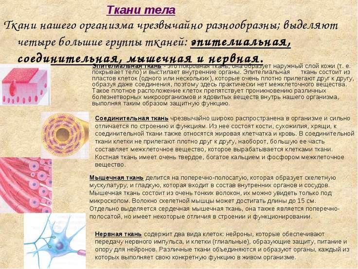 Нервная ткань содержит два вида клеток: нейроны, которые обеспечивают передач...