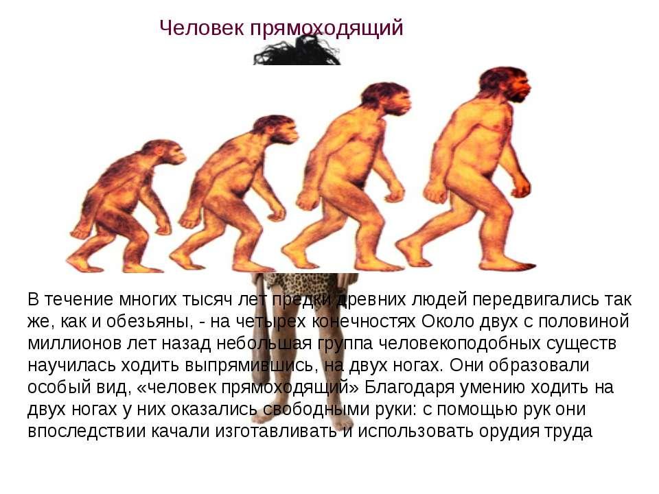 В течение многих тысяч лет предки древних людей передвигались так же, как и о...