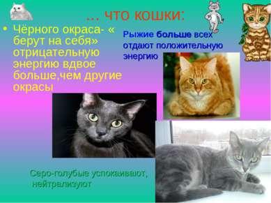 ... что кошки: Чёрного окраса- « берут на себя» отрицательную энергию вдвое б...