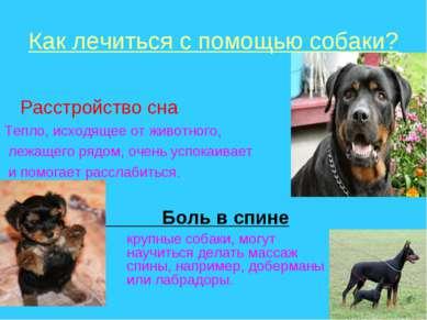 Как лечиться с помощью собаки? Расстройство сна Тепло, исходящее от животного...