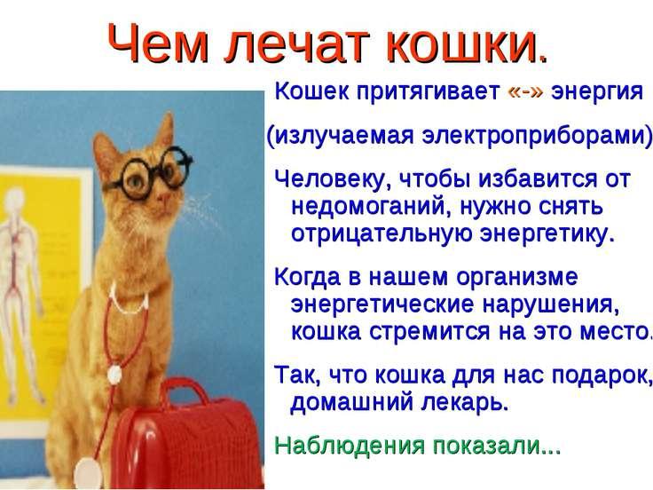 Чем лечат кошки. Кошек притягивает «-» энергия (излучаемая электроприборами) ...