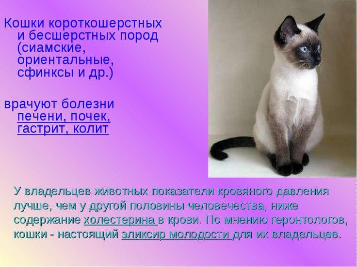 Кошки короткошерстных и бесшерстных пород (сиамские, ориентальные, сфинксы и ...