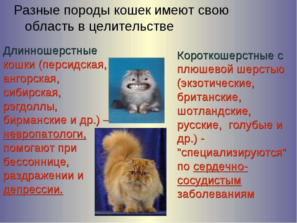Разные породы кошек имеют свою область в целительстве Длинношерстные кошки (п...