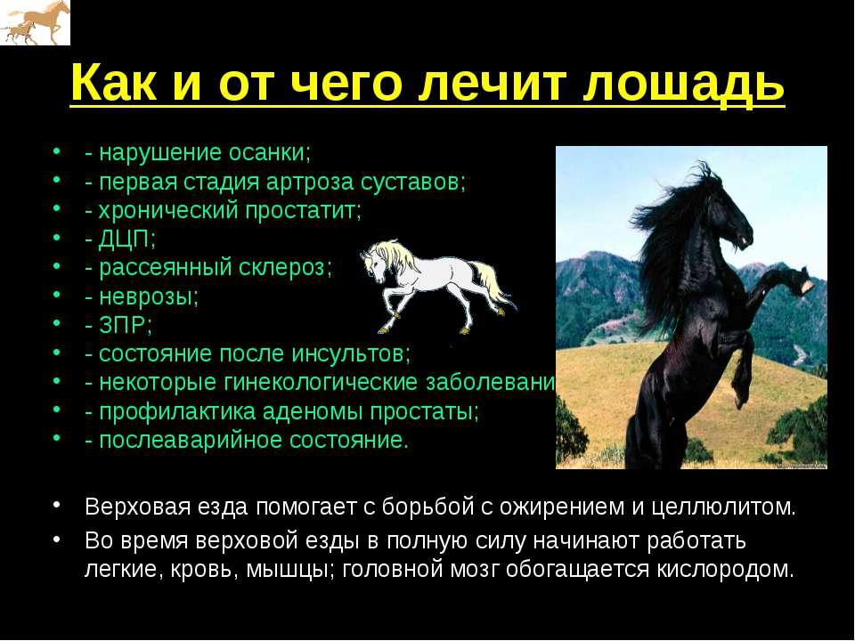 Как и от чего лечит лошадь - нарушение осанки;  - первая стадия артроза суст...