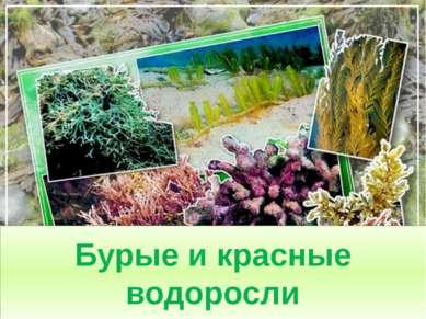 Бурые и красные водоросли