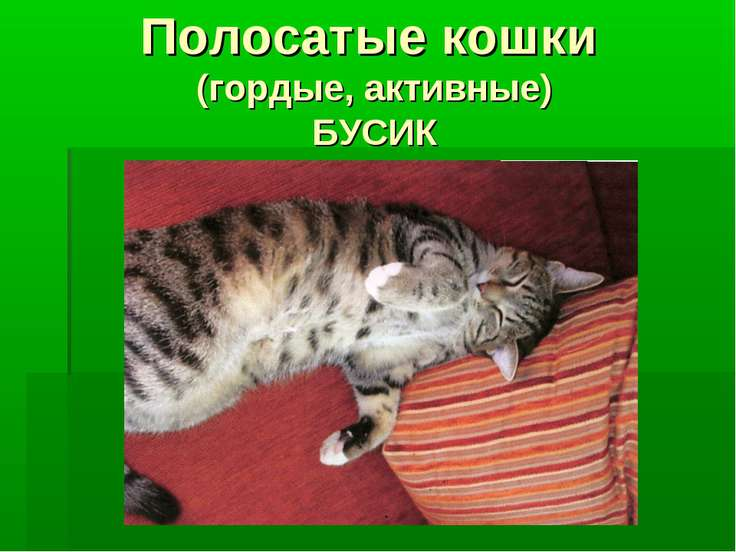 Полосатые кошки (гордые, активные) БУСИК
