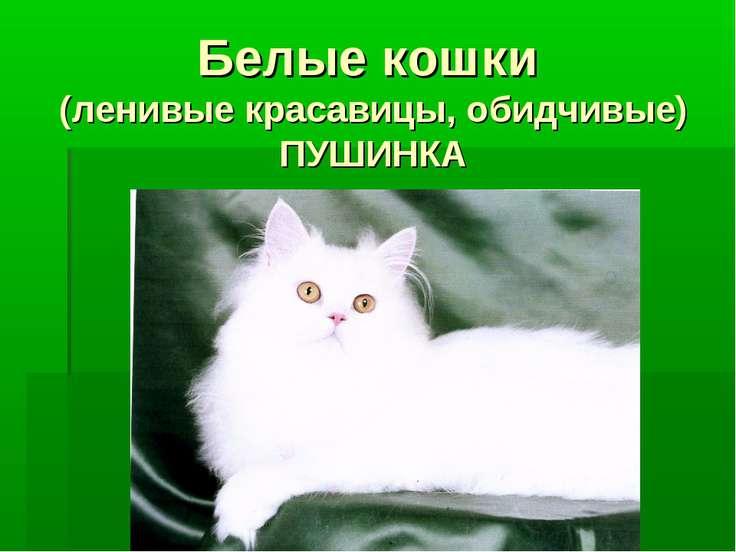 Белые кошки (ленивые красавицы, обидчивые) ПУШИНКА
