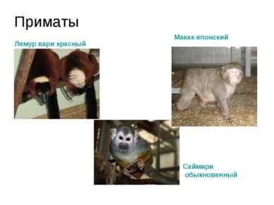Приматы Лемур вари красный Саймири обыкновенный Макак японский