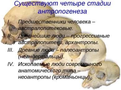 Существуют четыре стадии антропогенеза Предшественники человека – австралопит...