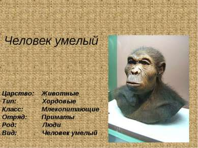 Человек умелый Царство: Животные Тип: Хордовые Класс: Млекопитающие Отряд: Пр...