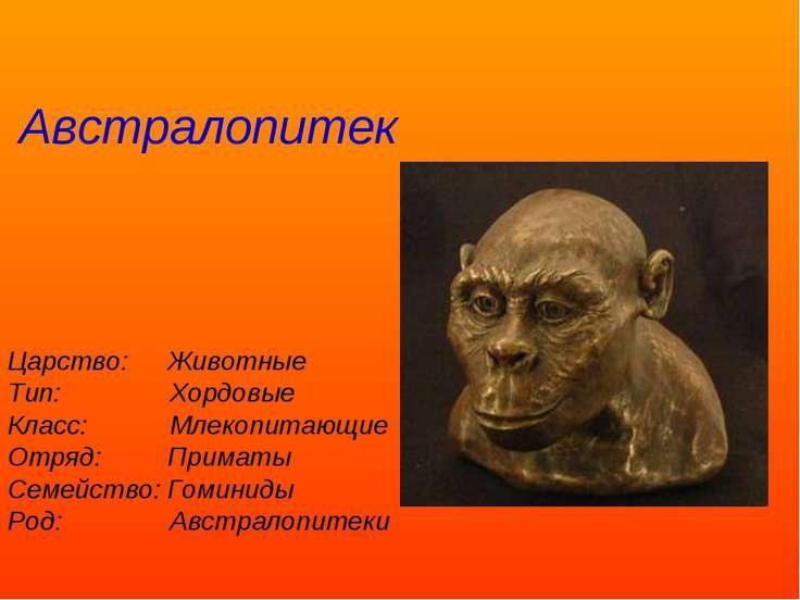 Царство: Животные Тип: Хордовые Класс: Млекопитающие Отряд: Приматы Семейство...