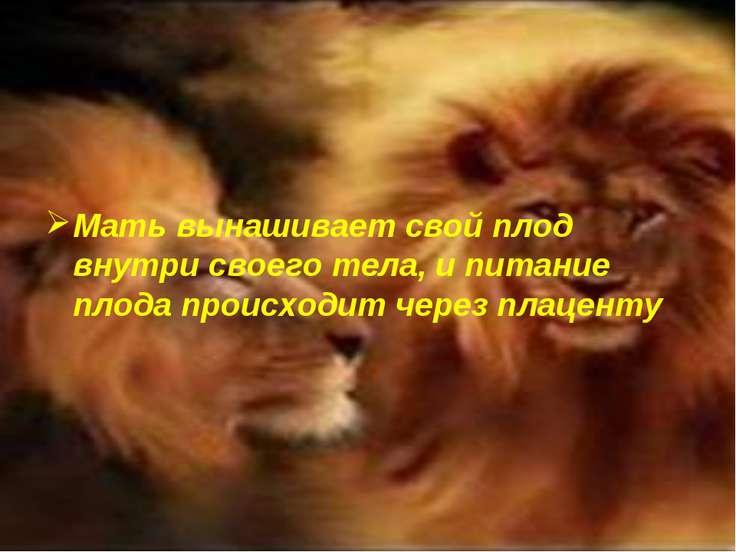 Мать вынашивает свой плод внутри своего тела, и питание плода происходит чере...