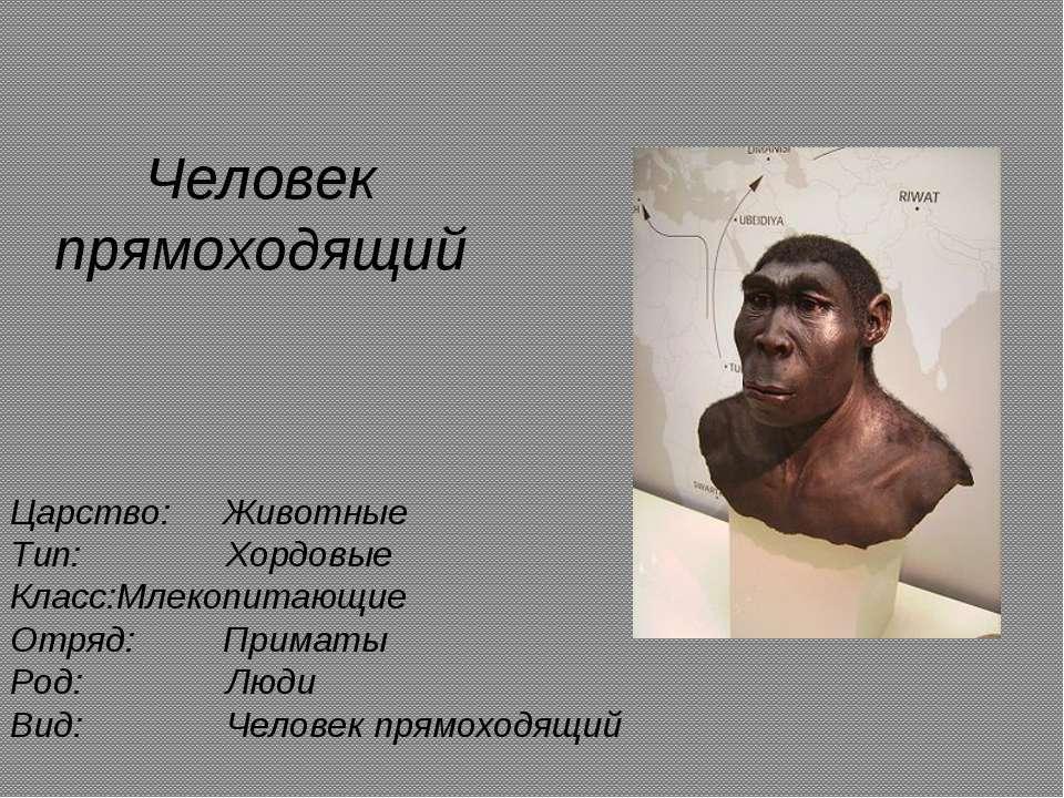 Человек прямоходящий Царство: Животные Тип: Хордовые Класс: Млекопитающие Отр...