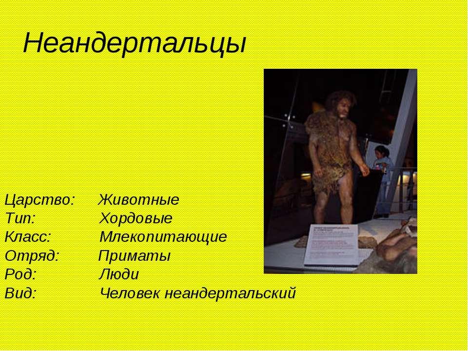 Неандертальцы Царство: Животные Тип: Хордовые Класс: Млекопитающие Отряд: При...