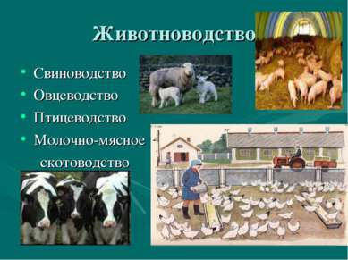 Животноводство Свиноводство Овцеводство Птицеводство Молочно-мясное скотоводство
