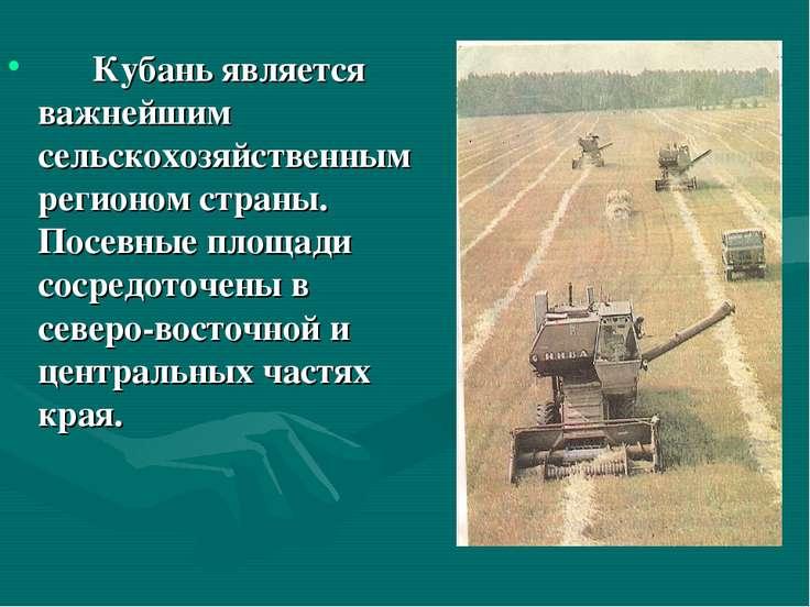 Кубань является важнейшим сельскохозяйственным регионом страны. Посевные площ...