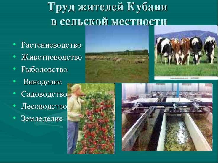 Труд жителей Кубани в сельской местности Растениеводство Животноводство Рыбол...