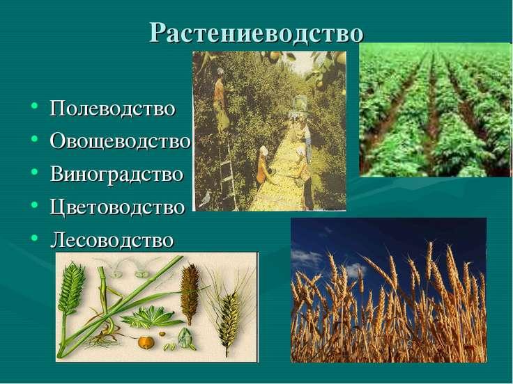 Растениеводство Полеводство Овощеводство Виноградство Цветоводство Лесоводство