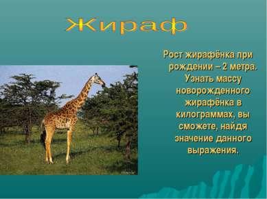 Рост жирафёнка при рождении – 2 метра. Узнать массу новорожденного жирафёнка ...