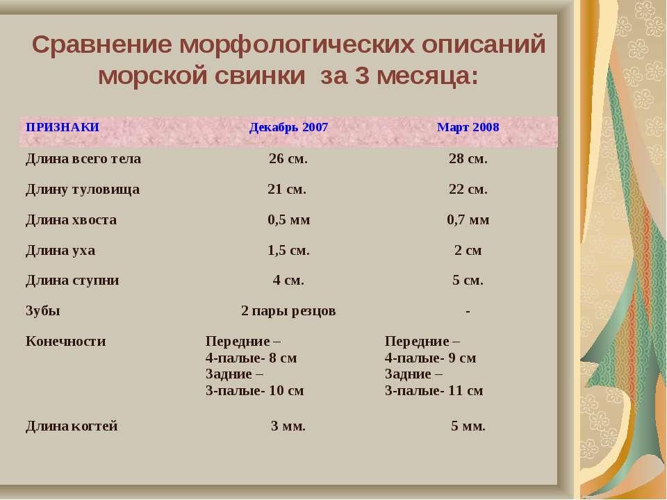 Сравнение морфологических описаний морской свинки за 3 месяца: ПРИЗНАКИ Декаб...