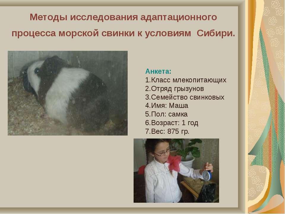 Методы исследования адаптационного процесса морской свинки к условиям Сибири....