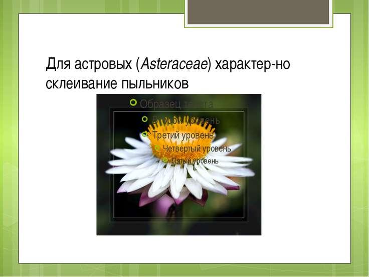 Для астровых (Asteraceae) характер но склеивание пыльников