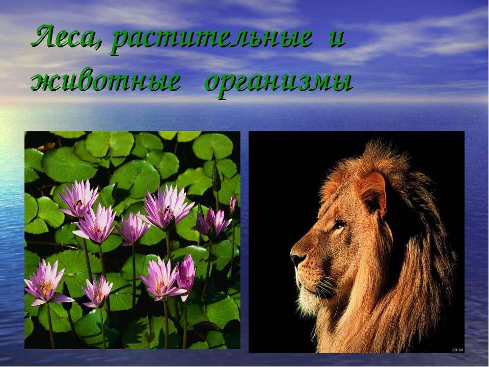 Леса, растительные и животные организмы