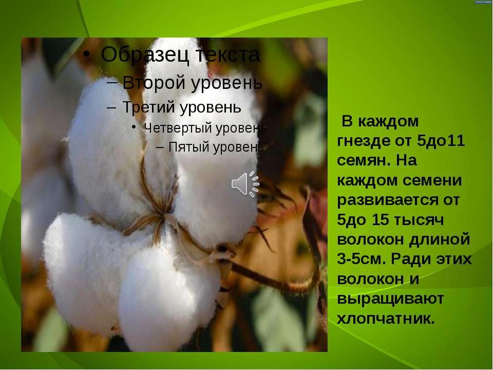 В каждом гнезде от 5до11 семян. На каждом семени развивается от 5до 15 тысяч ...