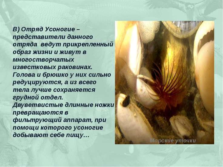 В) Отряд Усоногие – представители данного отряда ведут прикрепленный образ жи...