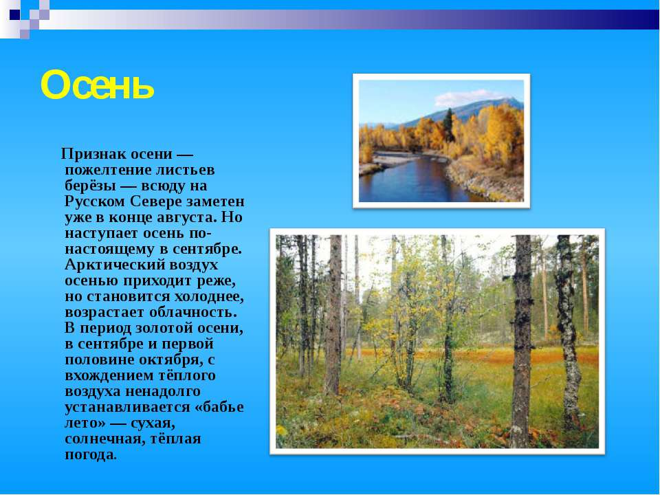 Осень Признак осени — пожелтение листьев берёзы — всюду на Русском Севере зам...