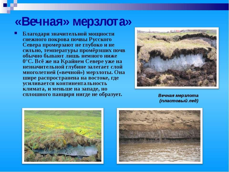 «Вечная» мерзлота» Благодаря значительной мощности снежного покрова почвы Рус...