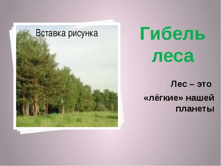 Гибель леса Лес – это «лёгкие» нашей планеты