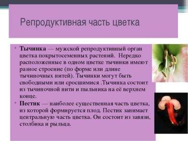 Репродуктивная часть цветка Тычинка — мужской репродуктивный орган цветка пок...