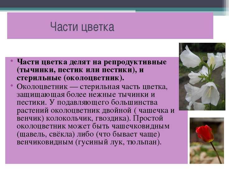 Части цветка Части цветка делят на репродуктивные (тычинки, пестик или пестик...