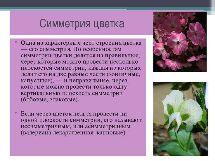 Симметрия цветка Одна из характерных черт строения цветка — его симметрия. По...
