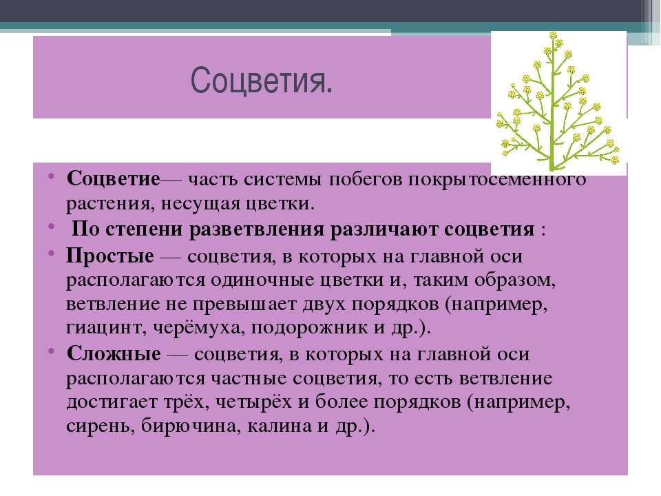 Соцветия. Соцветие— часть системы побегов покрытосеменного растения, несущая ...