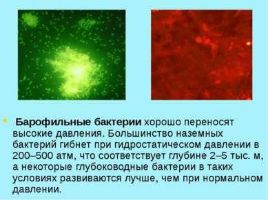 Барофильные бактерии хорошо переносят высокие давления. Большинство наземных ...