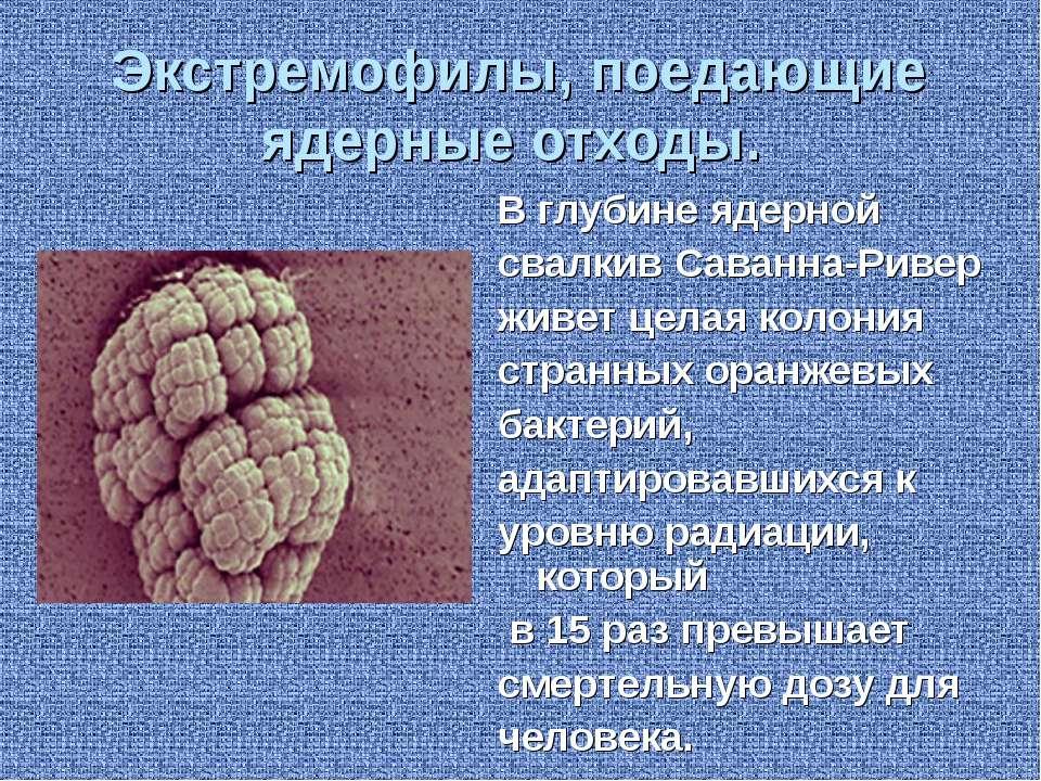 Экстремофилы, поедающие ядерные отходы. В глубине ядерной свалкив Саванна-Рив...